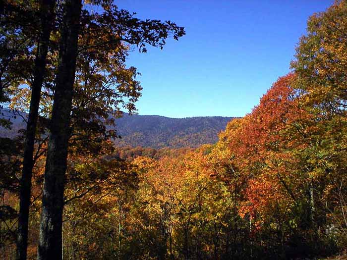 Fall Foliage On Newfound Gap Road Great Smoky Mountains