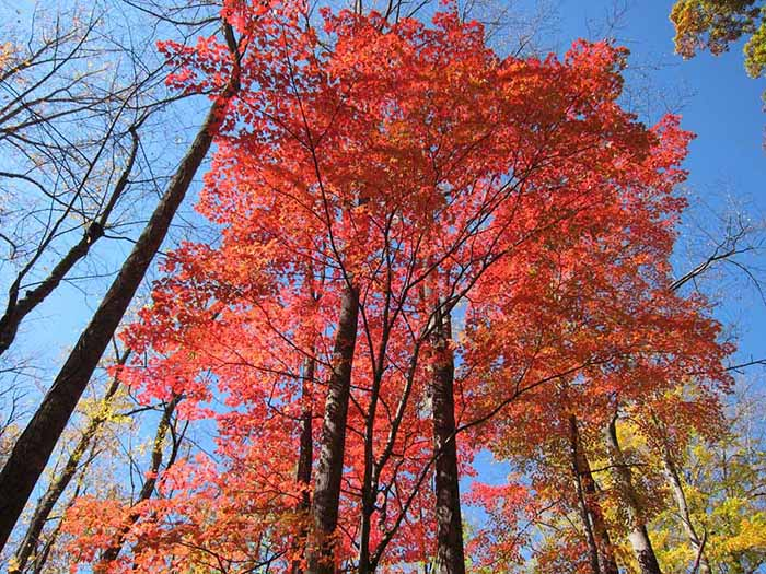 elkmont fall foliage