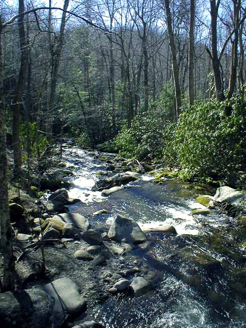 River roaring fork motor nature trail for Roaring fork smoky mountains