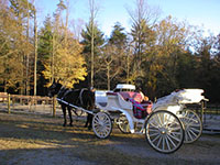 carriage rides smoky mountains